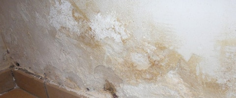 schimmel verwijderen muur hg