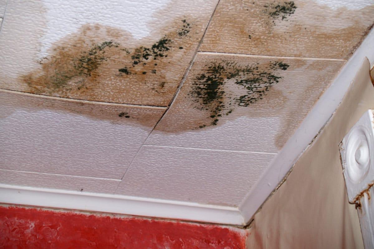 plafond vochtplekken verwijderen
