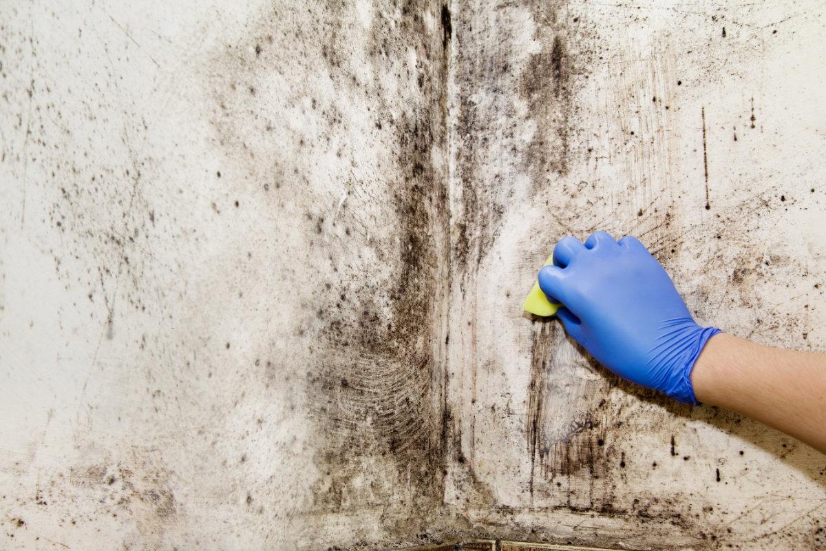 schimmel op muur verwijderen