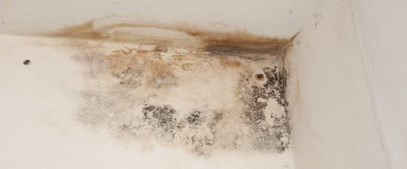vocht- en schimmelvlek muur