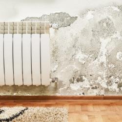 vochtigheidsgraad in huis